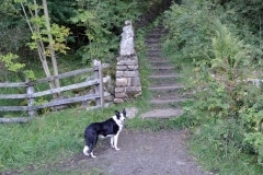 Pip Steps